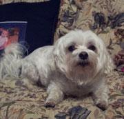 Jamie's Dog, Winston!