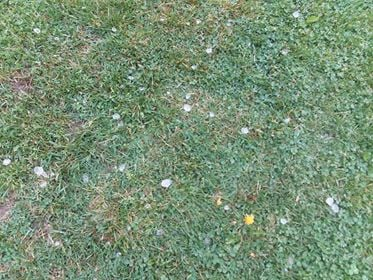 Hail in Montcalm on Saturday Afternoon. Photo Credit: Joanna Kendrick