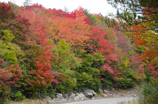 Photo courtesy of the West Virginia Division of Forestry. Foliage in the Davis/Thomas area of Tucker County Oct.1, 2013.