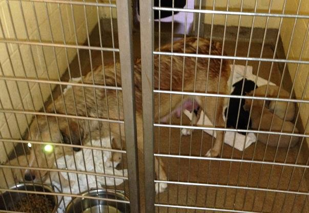 23 dogs and puppies are seized from a home in Mercer County