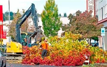 (AP Photo/The Daily News, John Markon). Workmen begin removing debris from two trees near the Columbia Theatre that snapped in the high winds, Thursday, Oct. 23, 2014 in Longview, Wash.