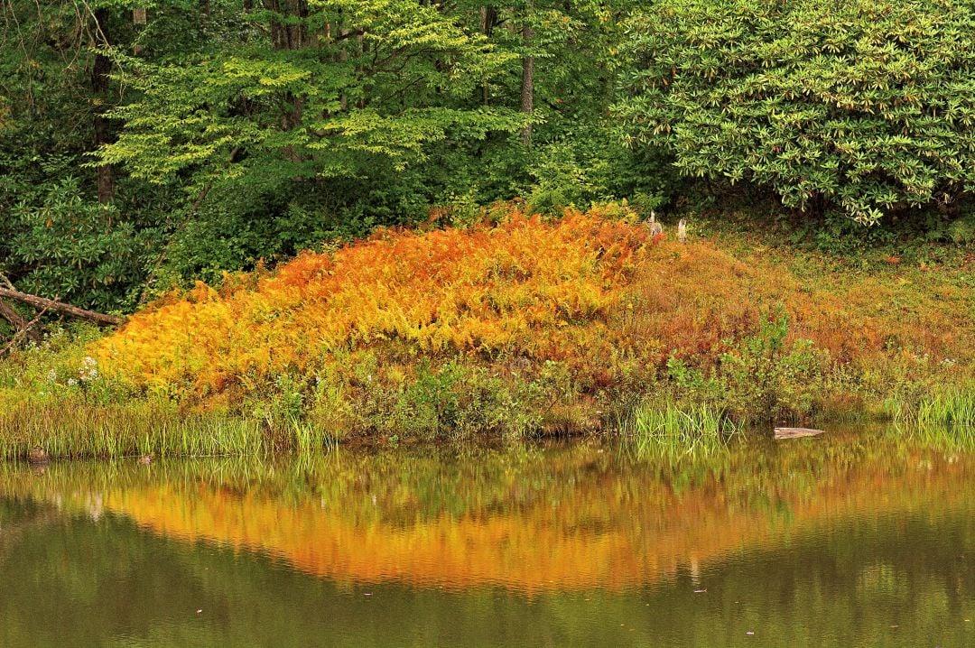Photo courtesy West Virginia Division of Forestry: Foliage near Thomas, W.Va., was 35 percent peak Sept. 23, 2015.