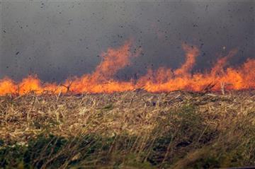 (Louis Brems/Quad City Times via AP, Fire). FILE - In this Oct. 12, 2015 photo, a raging fire burns through a corn field at in Eldridge, Iowa.