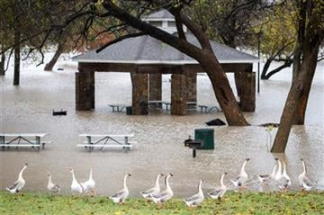 (Smiley N. Pool/The Dallas Morning News via AP). Geese walks along the edge of rising floodwater in Towne Lake Park on Friday, Nov. 27, 2015, in McKinney, Texas.