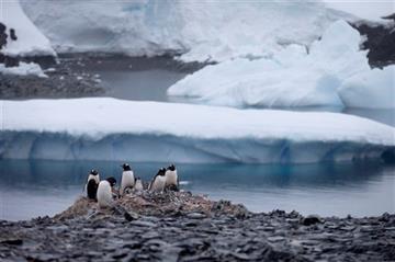(AP Photo/Natacha Pisarenko, File). FILE - In this Jan. 22, 2015 file photo, Gentoo penguins stand on rocks near the Chilean station Bernardo O'Higgins, Antarctica.